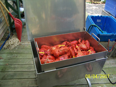 Delicious lobsters in lobster steamer